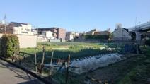 蛍池最後の畑