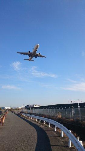 飛行機とニアミスする道の画像
