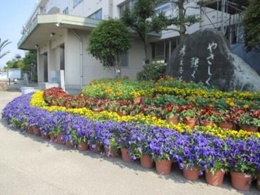 石井東小学校の画像1