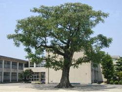 正岡小学校の画像1