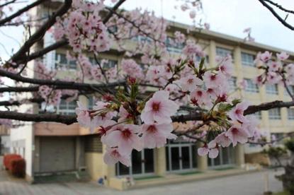 三津浜中学校の画像1