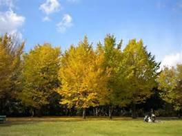 青葉の森公園彫刻の広場の画像3