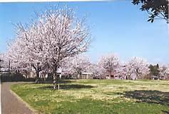 誉田さくら公園の画像1