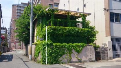 グリーンモンスターハウスの画像1