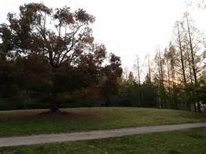 泉谷公園の画像2