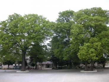 鴻巣市立鴻巣東小学校の画像1