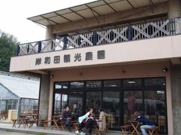 岸和田観光農園の画像1