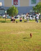 市原市ちはら台公園多目的スポーツ広場の画像3