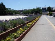 市原市立辰巳台西小学校の画像2
