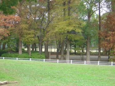 流山市総合運動公園の画像3