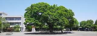 高崎市立北小学校の画像1