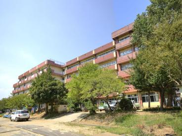 松戸市立 河原塚小学校の画像1