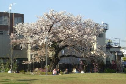 新宿区立富久さくら公園の画像1