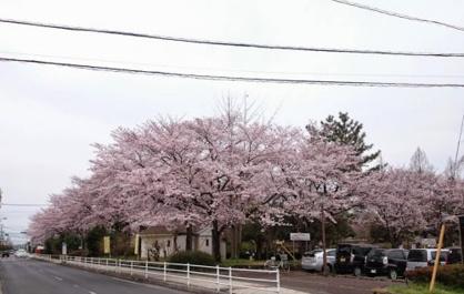 吉羽公園の画像1