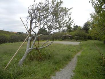 梅林公園の画像2