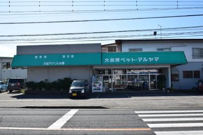 大田原ペットショップマルヤマの画像1