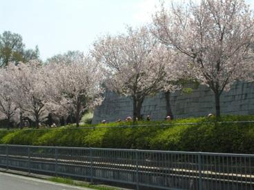 大阪府立狭山池博物館の画像4