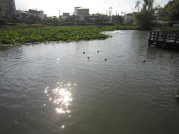 小寺池の画像2