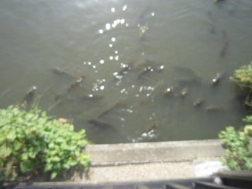 小寺池の画像3
