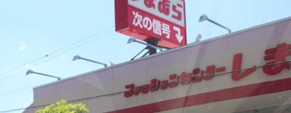 しまむら古市店の画像1