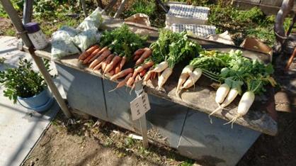 蛍池にあった新鮮野菜の無人販売所の画像2