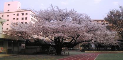 志村第二中学校の画像1