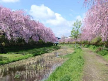 野川公園の画像1