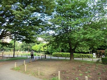 秋の陽公園の画像1