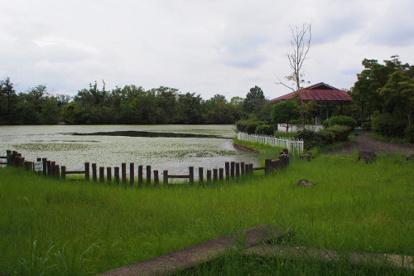 新池公園の画像1