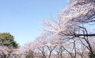 三ツ沢公園の画像1