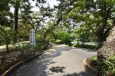 夙川公園 香櫨園