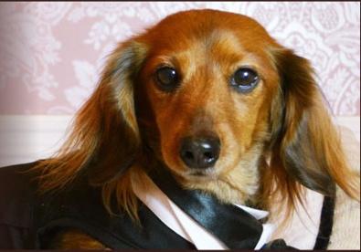 Doggy-J (ドギージェイ)の画像3