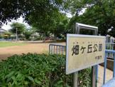 畑ヶ丘公園