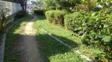 藤が丘緑地