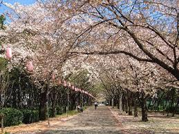 辰巳の森緑道公園の画像1