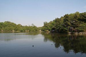 三宝寺池公園の画像1