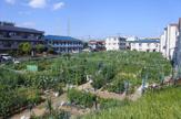 川崎市民農園