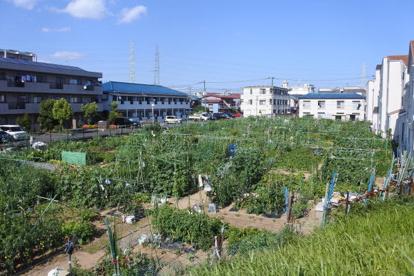 川崎市民農園の画像1