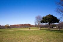 埼玉県営みさと公園