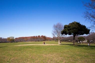 埼玉県営みさと公園の画像1