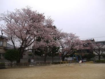 はまなす公園の画像1