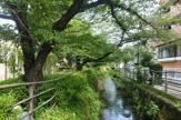 二ヶ領用水・今井上町緑道