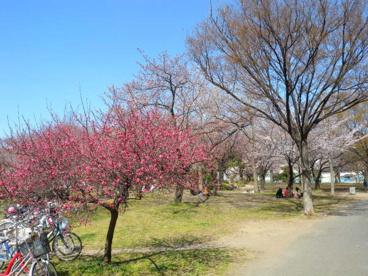 南河原公園の画像1