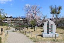 今泉名水桜公園