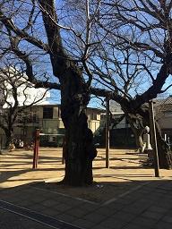 雷神山児童公園の画像3