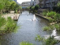 木場親水公園の画像1