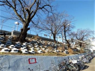 身延線善光寺駅の画像2