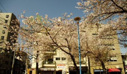 東小橋北公園の画像3