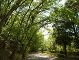 宝が池公園 北園