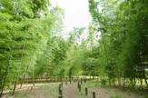 おくらやまの森緑地